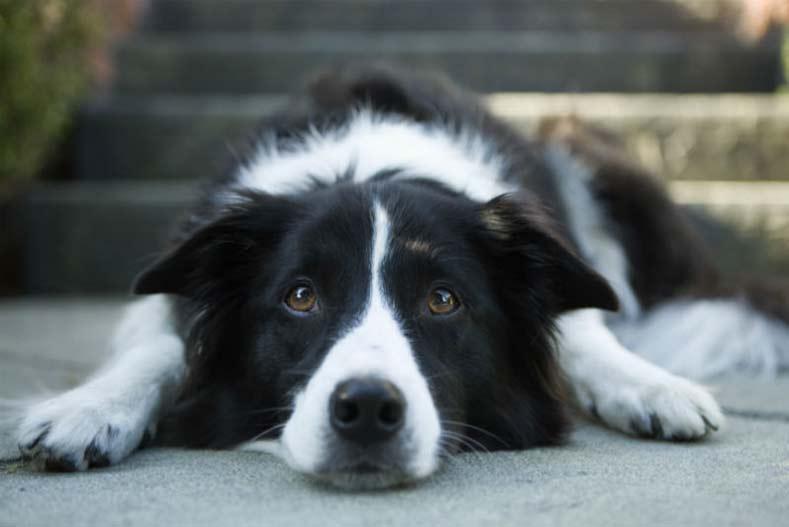 Epilepsi pada Anjing