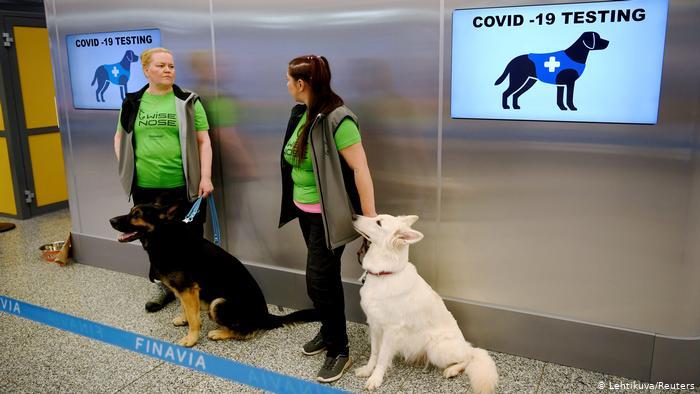 Berita Hewan Anjing Di Dunia Ocdwa